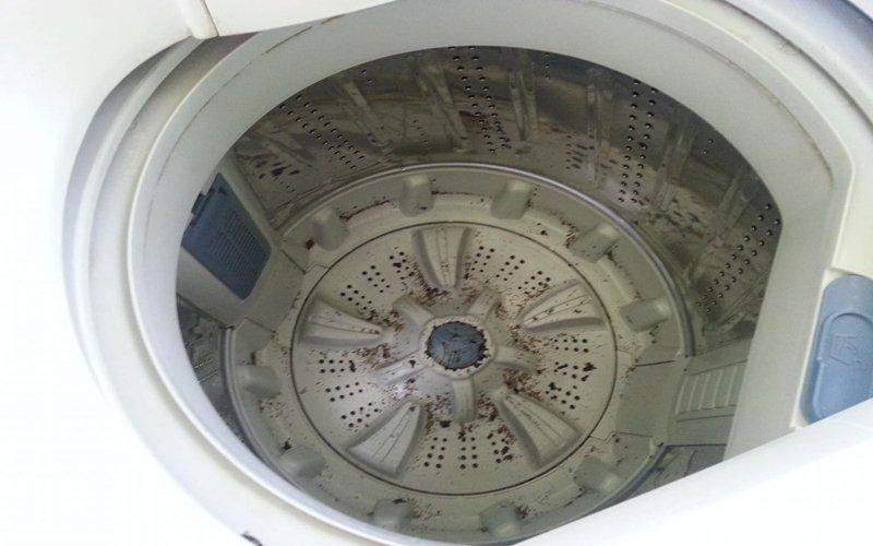 lồng máy giặt là nơi chưa nhiều vi khuẩn, nấm mốc